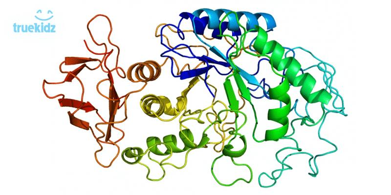 Amylase và tác dụng đối với chứng biến ăn ở trẻ nhỏ